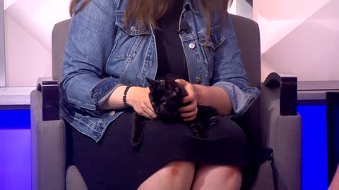 Pet of the Week: 3-month-old kitten Vesuvius