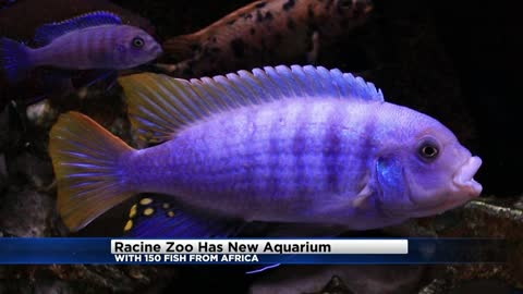 New fish exhibit now open at The Racine Zoo