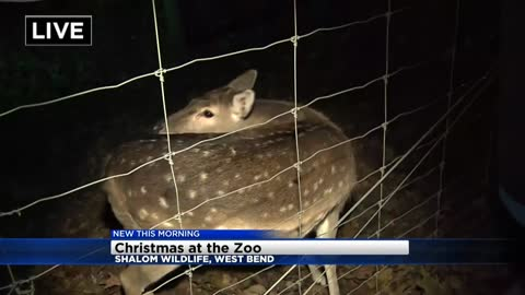 Have some yuletide fun at Shalom Wildlife in West Bend