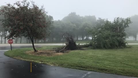 Wind, wet ground likely caused downed trees in St. Francis