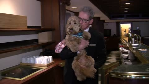 A day at work with Millie the canine concierge