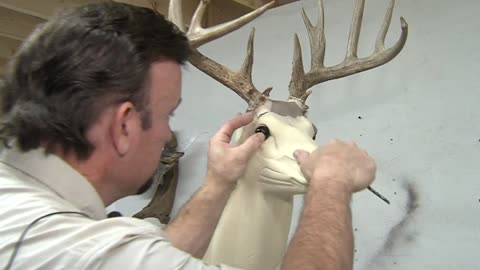 Inside the studio of an expert Wisconsin taxidermist