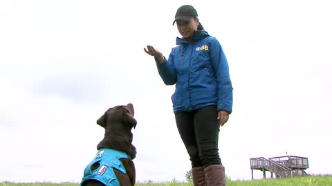 Meet Tilia: Wisconsin's first conservation canine