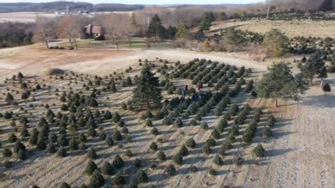 Cut your own Christmas Tree tradition maintained at Walworth County tree farm