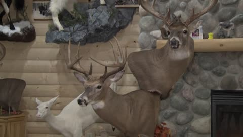 Award-winning taxidermist explains process, profession