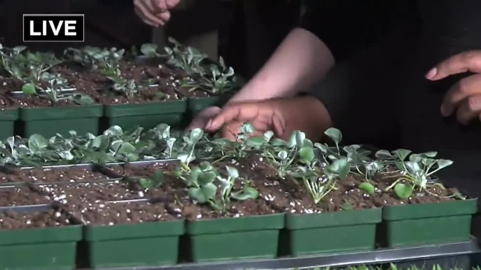 Teens and professional organization bond over plants