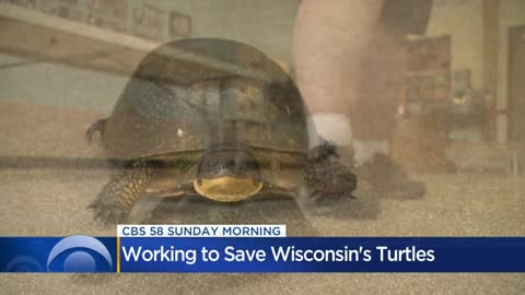 Worries grow over Wisconsin's turtle population