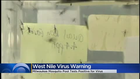 Mosquito pool in Milwaukee tests positive for West Nile Virus