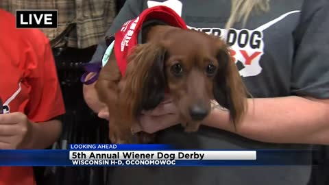 Wisconsin Harley-Davidson in Oconomowoc going to the dogs this weekend