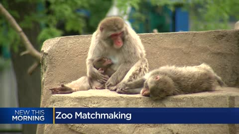 """Dating system for animal species:"" How zoos manage sustainability though matchmaking"