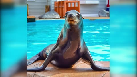 Milwaukee County Zoo introduces new sea lion