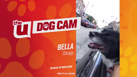 Bella of Chicago