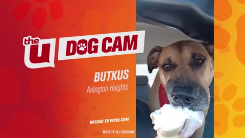 BUTKUS - ARLINGTON HEIGHTS