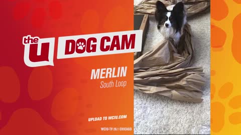 MERLIN - SOUTH LOOP