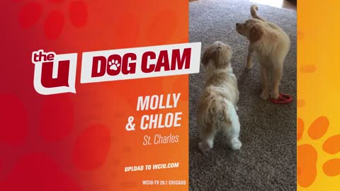 MOLLY AND CHLOE - ST CHARLES