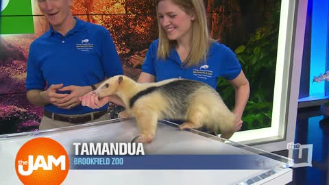 Getting Wild With Brookfield Zoo Animals