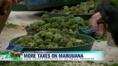 Recreational Marijuana Taxes Increasing