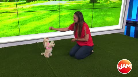 'Anything is Pawzible' Dog Training Tricks
